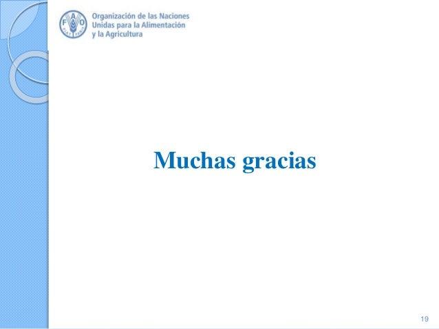 Muchas gracias Thank you 19