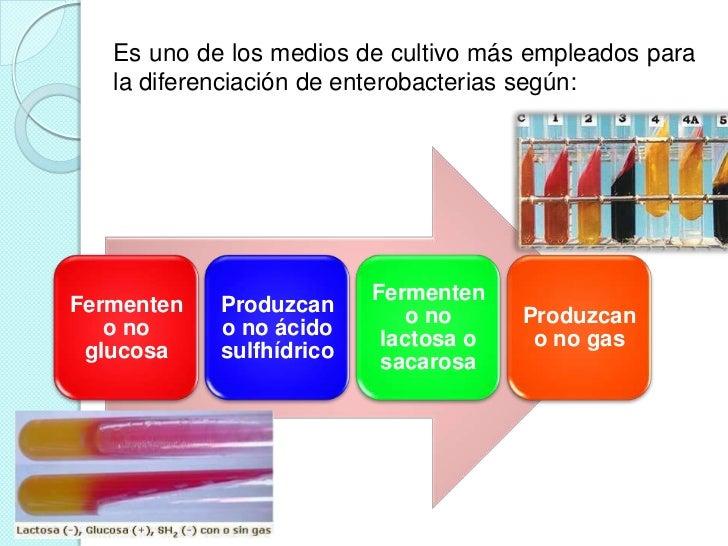 Es uno de los medios de cultivo más empleados para   la diferenciación de enterobacterias según:                          ...