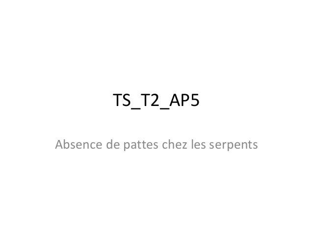 TS_T2_AP5 Absence de pattes chez les serpents