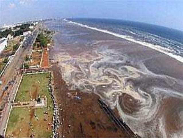 tsunami in sri lanka essay Effect of the 2004 indian ocean earthquake on sri lanka  autism awareness campaign sri lanka blog – tsunami in sri lanka news & information.