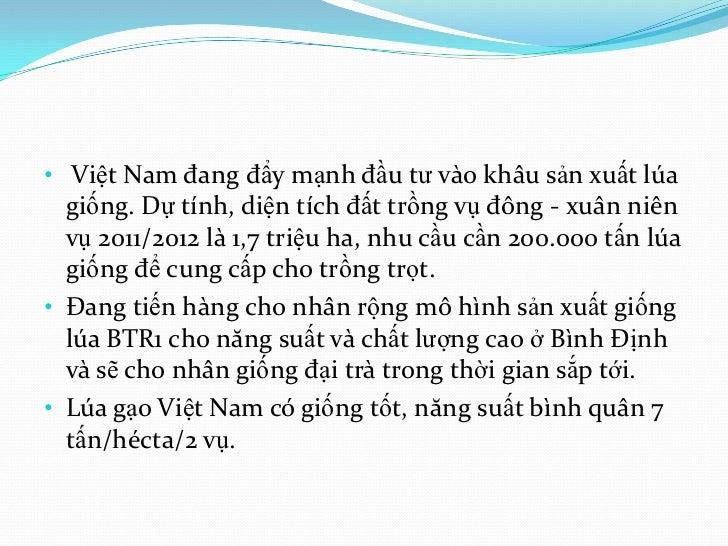 • Việt Nam đang đẩy mạnh đầu tư vào khâu sản xuất lúa  giống. Dự tính, diện tích đất trồng vụ đông - xuân niên  vụ 2011/20...