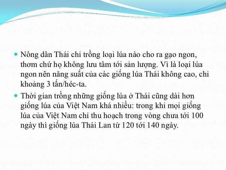  Nông dân Thái chỉ trồng loại lúa nào cho ra gạo ngon,  thơm chứ họ không lưu tâm tới sản lượng. Vì là loại lúa  ngon nên...