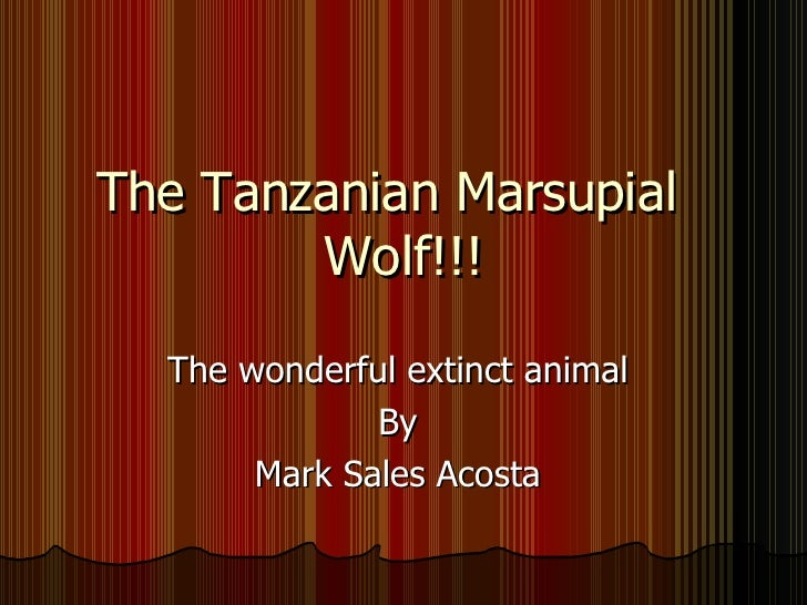 The Tanzanian Marsupial  Wolf!!! The wonderful extinct animal  By  Mark Sales Acosta