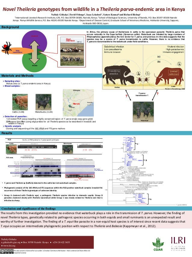 0 Novel Theileria genotypes from wildlife in a Theileria parva-endemic area in Kenya Naftaly Githaka1, David Odongo2, Isaa...