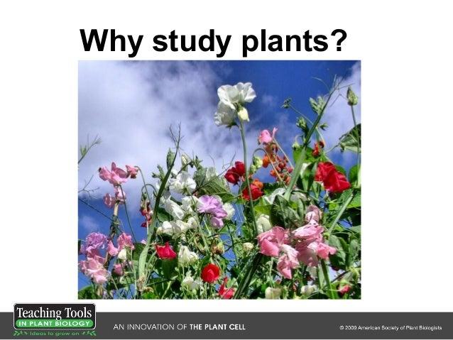Why study plants?