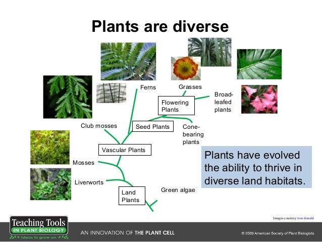 Ttpb1 whystudyplants Slide 3