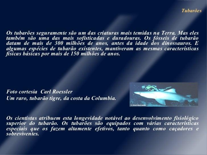 Tubarões <ul><li>Os tubarões seguramente são um das criaturas mais temidas na Terra. Mas eles também são uma das mais sofi...