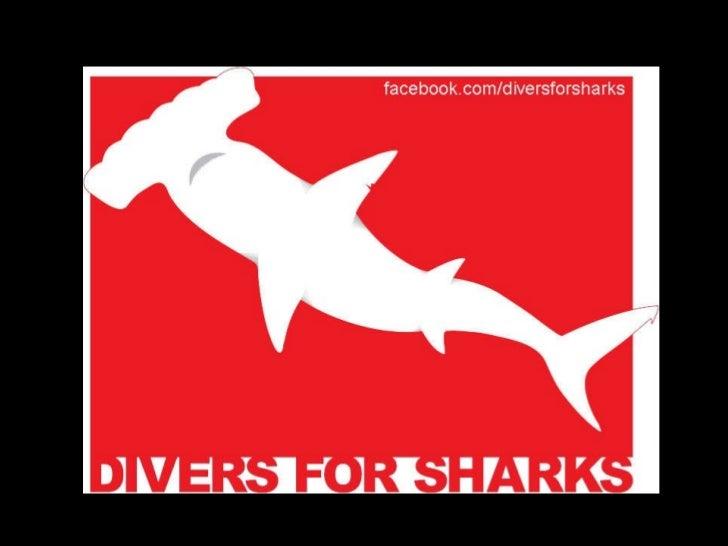 Divers for Sharks Tubarões no Limite Slide 1