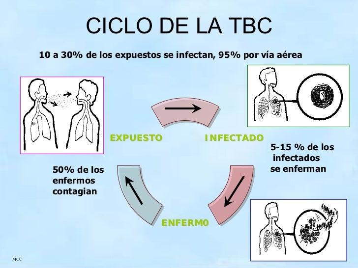 pathogenesis of mycobacterium tuberculosis pdf