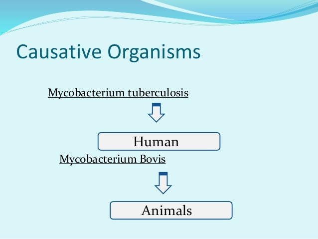 Causative Organisms Mycobacterium tuberculosis Mycobacterium Bovis Human Animals