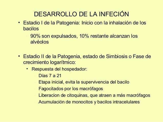 DESARROLLO DE LA INFECIÓN• Estadio I de la Patogenia: Inicio con la inhalación de losbacilos- 90% son expulsados, 10% rest...