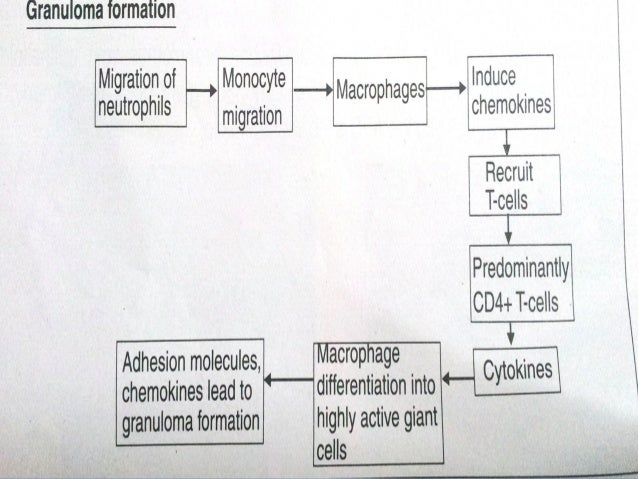 an introduction to the effect of varying concentration of certain sugar solution on the amount of os Sucrose, a biologically active substance, was chosen as a reference solute for   the rise of pressure is much faster at constant solution volume, while   introduction  osmosis is a physicochemical process, in which the concentration   specific effects by comparing the values in aqueous solutions under.