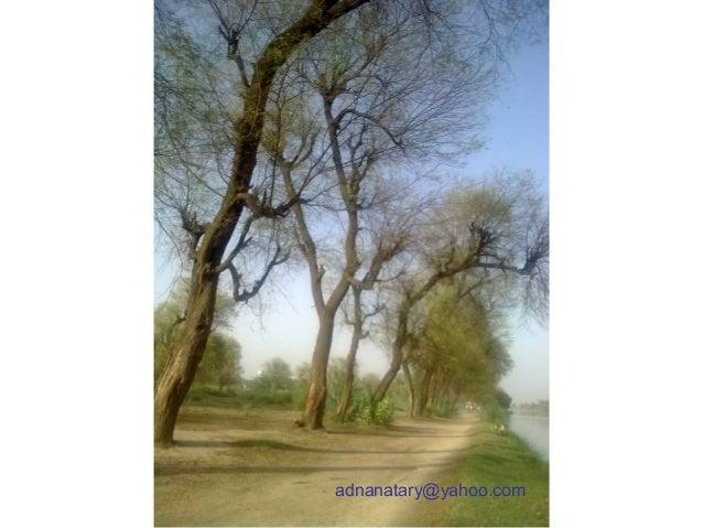 adnanatary@yahoo.com
