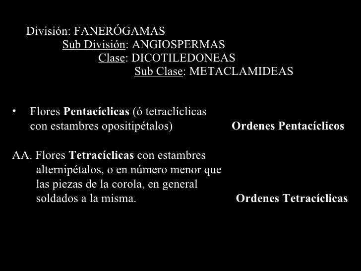 División : FANERÓGAMAS Sub División : ANGIOSPERMAS Clase : DICOTILEDONEAS Sub Clase : METACLAMIDEAS <ul><li>Flores  Pentac...