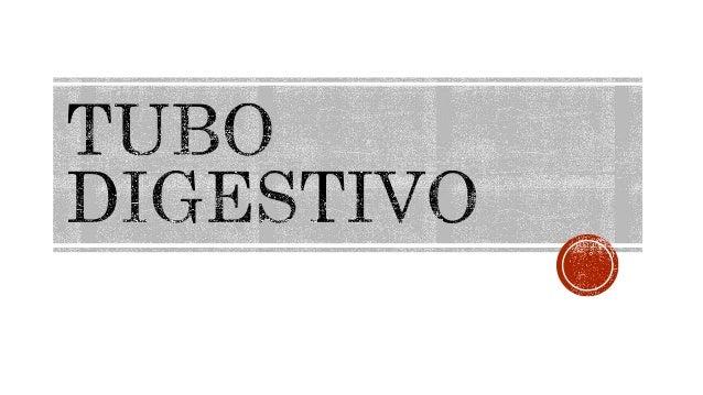 TUBO DIGESTIVO  vw '~ à.  « a
