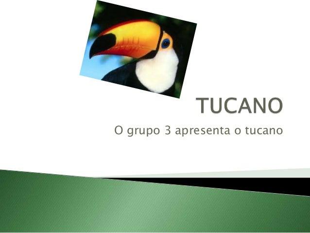 O grupo 3 apresenta o tucano