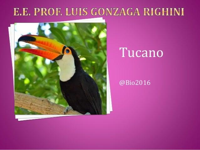 Tucano @Bio2016