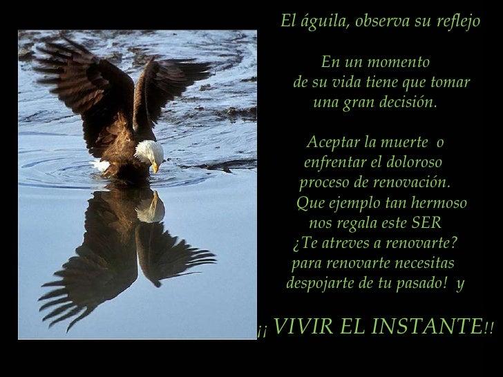 El águila, observa su reflejo En un momento de su vida tiene que tomar  una gran decisión. Aceptar la muerte  o enfrentar ...