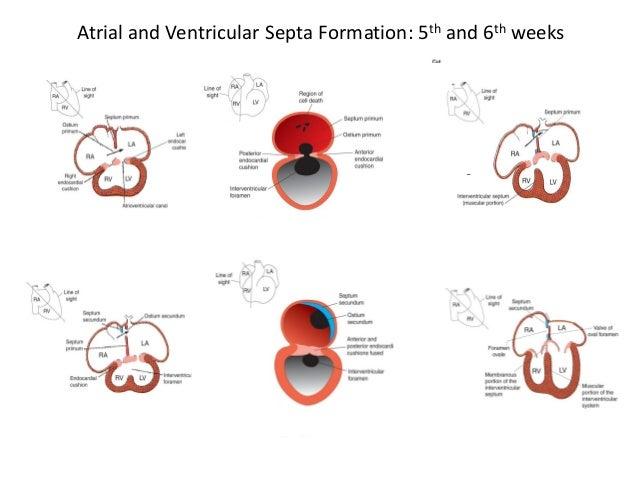 Fetal Development as Vulnerable Periods