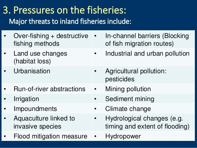 3. Pressures on the fisheries: Major threats to inland fisheries include: • Over-fishing + destructive fishing methods • I...
