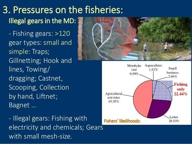 3. Pressures on the fisheries: Illegal gears in the MD: - Fishing gears: >120 gear types: small and simple: Traps; Gillnet...