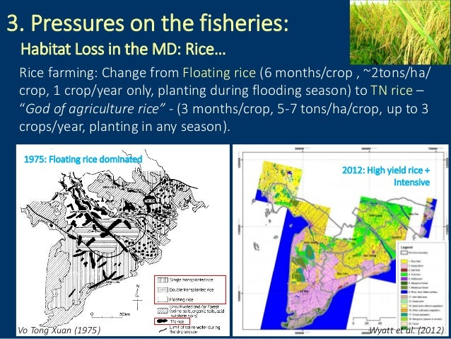 3. Pressures on the fisheries: Habitat Loss in the MD: Rice… Vo Tong Xuan (1975) Wyatt et al. (2012) Rice farming: Change ...