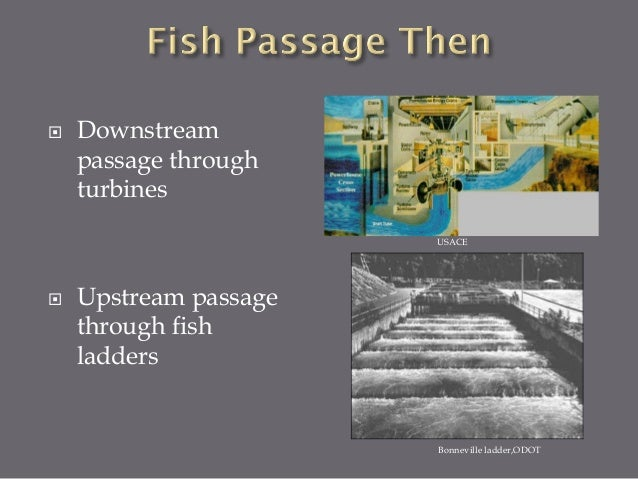  Downstream  Spill  Surface weirs  Flow Augmentation  Juvenile Bypass  Transportation  Turbine redesign  Upstream ...