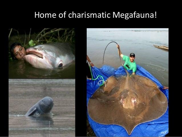 Home of charismatic Megafauna!