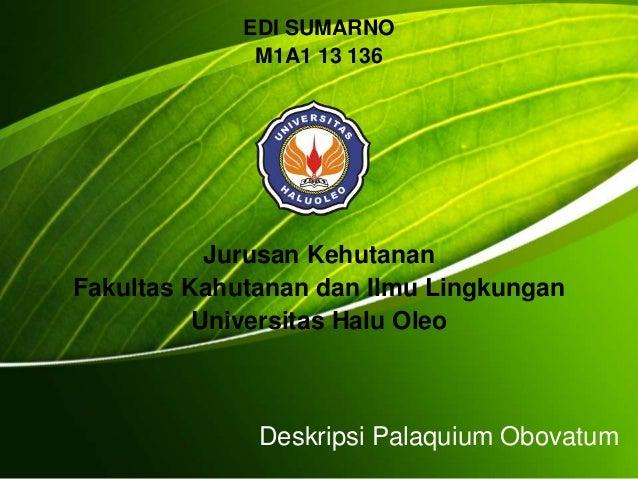 Deskripsi Palaquium Obovatum EDI SUMARNO M1A1 13 136 Jurusan Kehutanan Fakultas Kahutanan dan Ilmu Lingkungan Universitas ...