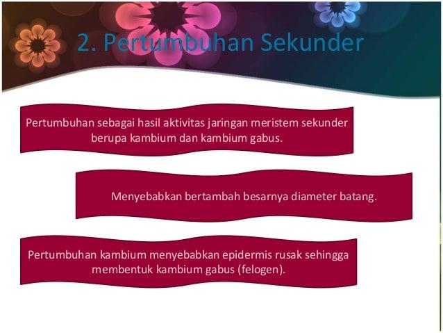 2. Pertumbuhan Sekunder  Pertumbuhan sebagai hasil aktivitas jaringan meristem sekunder  berupa kambium dan kambium gabus....
