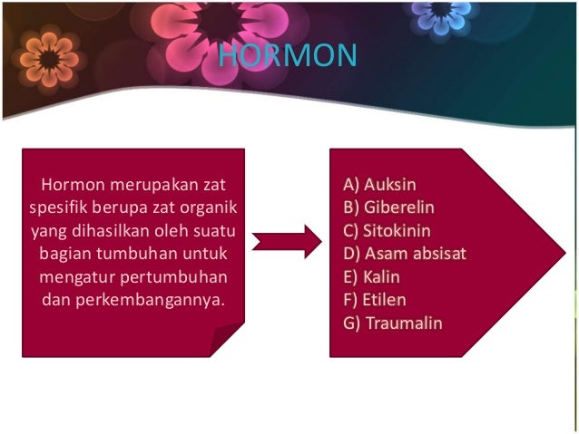 HORMON  Hormon merupakan zat  spesifik berupa zat organik  yang dihasilkan oleh suatu  bagian tumbuhan untuk  mengatur per...
