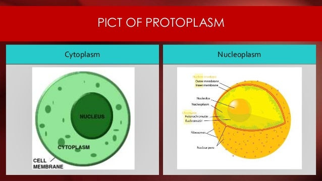 Nuclear Envelope Plant Cell