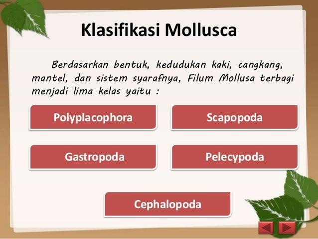 Mollusca dan Arthropoda - Biologi
