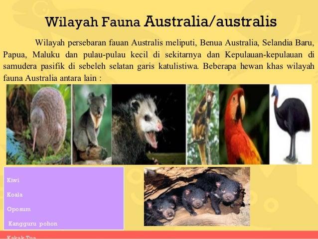 65 Gambar Hewan Di Wilayah Australis Terbaru