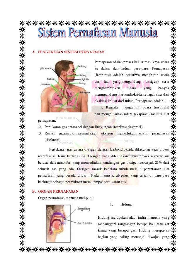 Materi Sistem Pernafasan Manusia