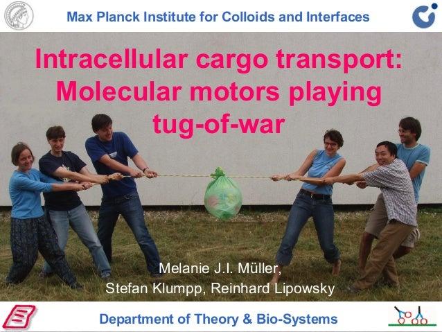 Intracellular cargo transport: Molecular motors playing tug-of-war Melanie J.I. Müller, Stefan Klumpp, Reinhard Lipowsky D...