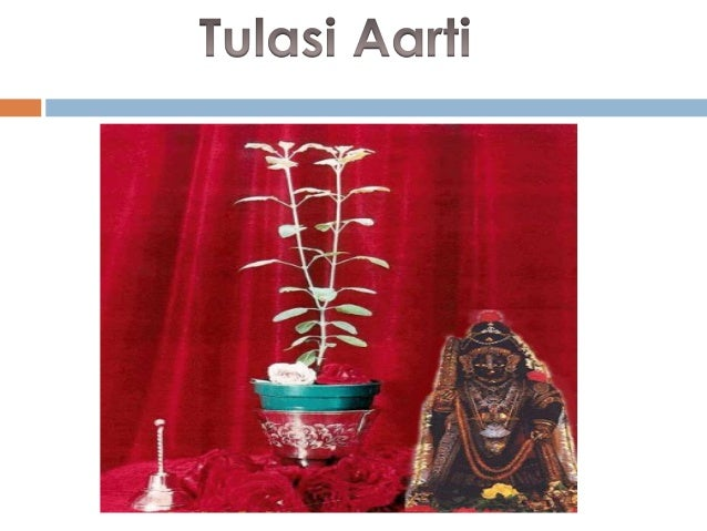 """In the Skanda Purana there is a statement praising the tulasi tree as follows: ""Let me offer my respectful obeisances unt..."