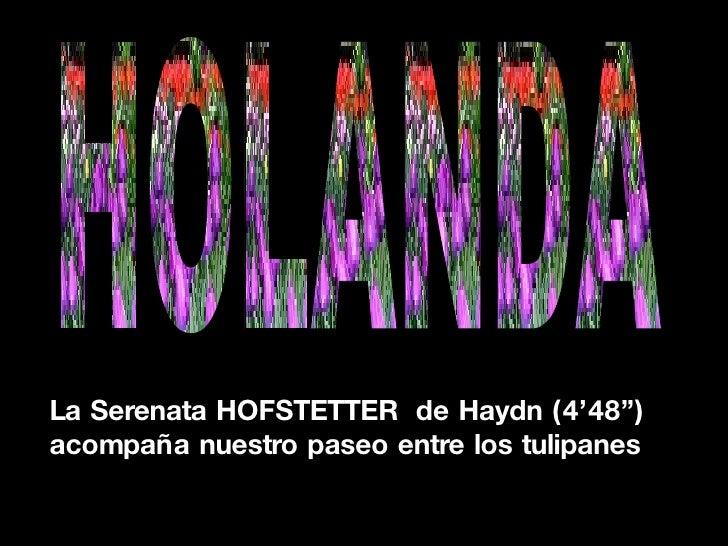 """La Serenata HOFSTETTER  de Haydn (4'48"""")  acompaña nuestro paseo entre los tulipanes HOLANDA"""