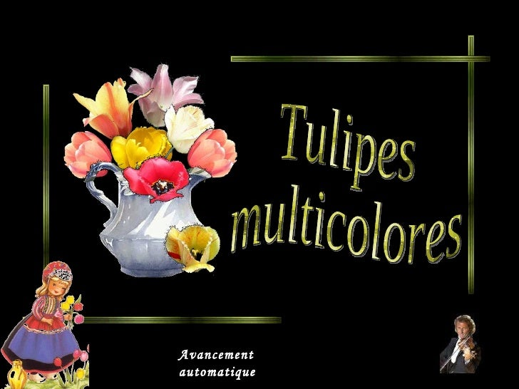 Tulipes multicolores Avancement automatique