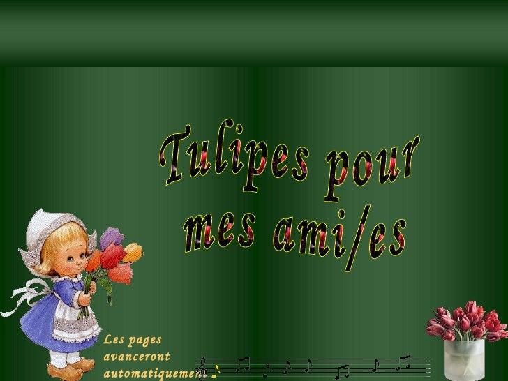 Tulipes pour  mes ami/es Les pages avanceront automatiquement