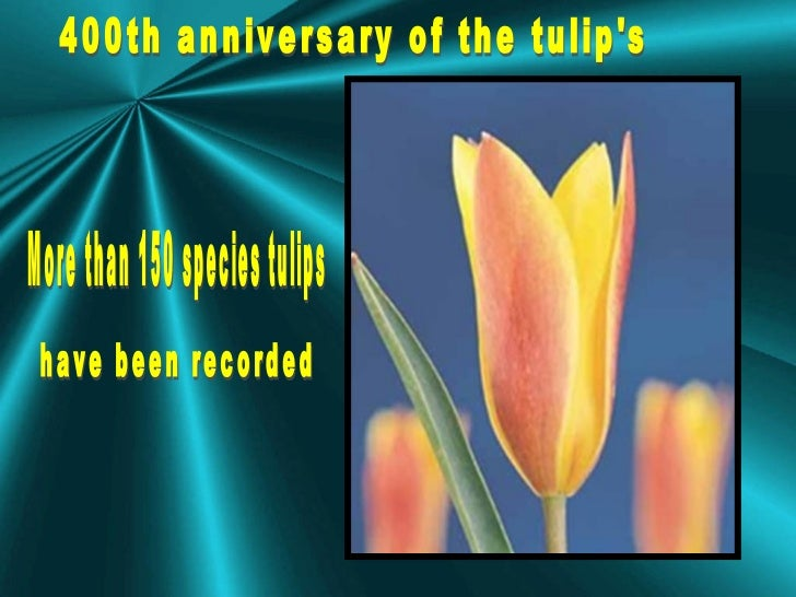 400th anniversary of the tulip's More than 150 species tulips  have been recorded