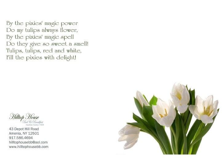 Tulip post card