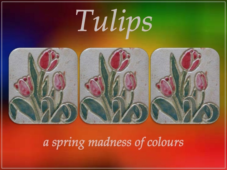 Tulips<br />a spring madness of colours<br />