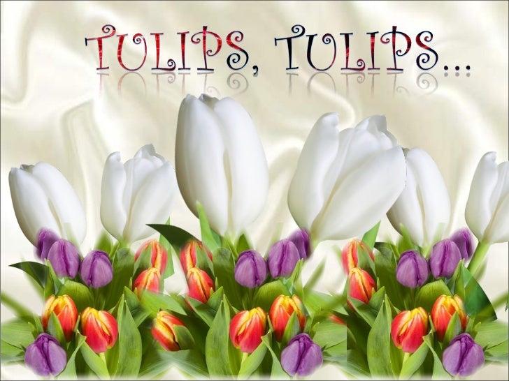 Tulips, Tulips Slide 2