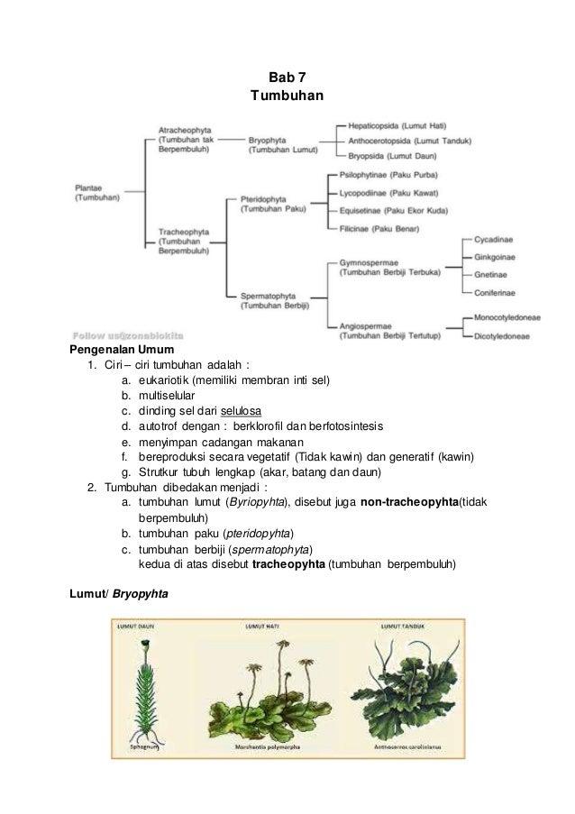 Bab 7 Tumbuhan Pengenalan Umum 1. Ciri – ciri tumbuhan adalah : a. eukariotik (memiliki membran inti sel) b. multiselular ...