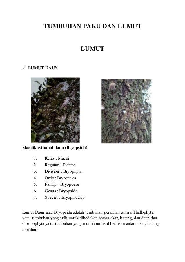 tumbuhan paku dan lumut 1 638 - Nama Nama Biologi Jenis Lumut