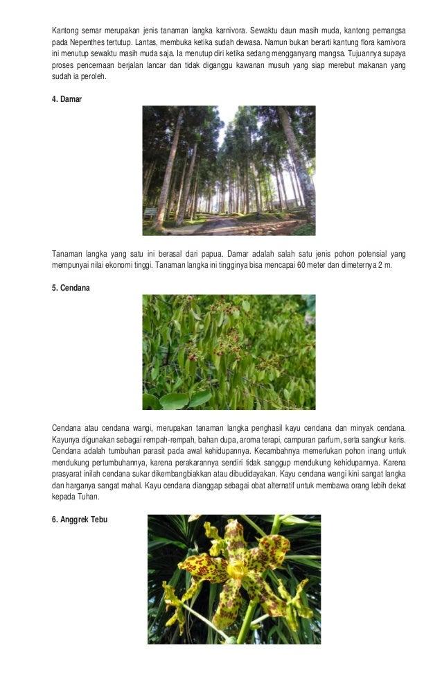Tumbuhan dan hewan langka di indonesia Slide 3