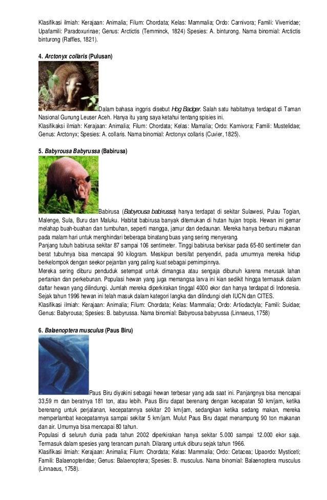 6700 Koleksi Gambar Dan Nama Hewan Langka Di Indonesia HD