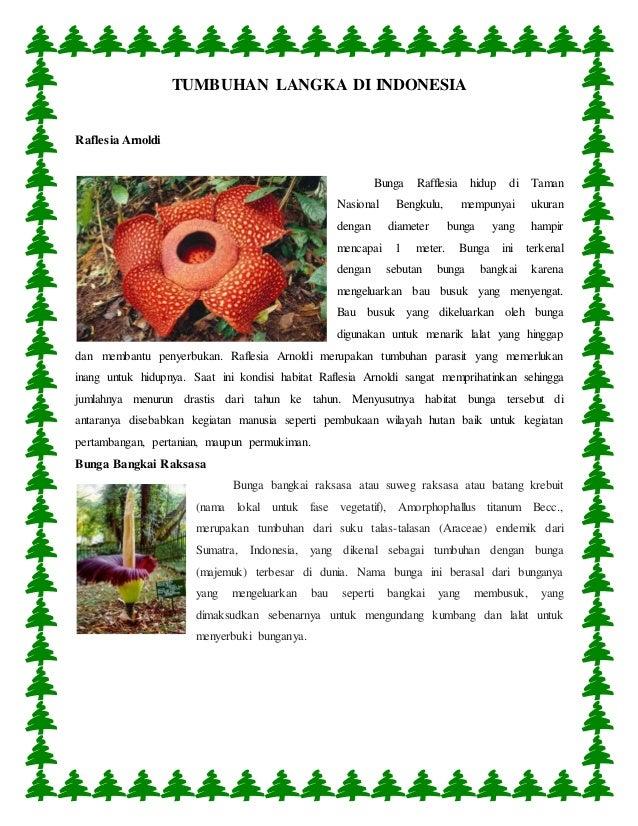 Download 9400 Gambar Bunga Rafflesia Arnoldi Beserta Penjelasannya Terbaik