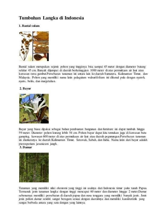 8600 Nama Dan Gambar Hewan Dan Tumbuhan Langka Di Indonesia Terbaik